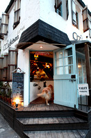 OZ_kitchen_dog_Seoul_IMG_9613